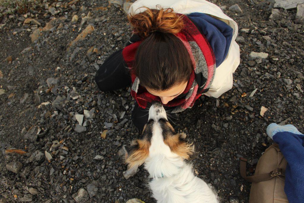viajar con perro y educación canina