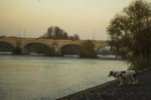 viajar con perro en el Loira