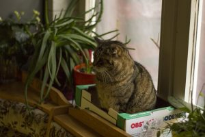 el gato más viejo del mundo